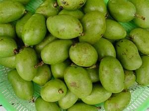 Health Benefits of Green Mangoes(unriped)  Health Benefits