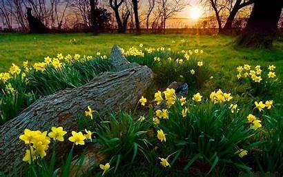 Spring Flowers Yellow Grass Snset Nature Desktop