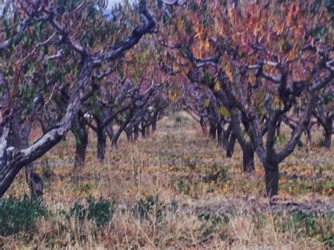 pruning apple trees in autumn fruit tree pruning at its best can fruit trees be pruned in the fall