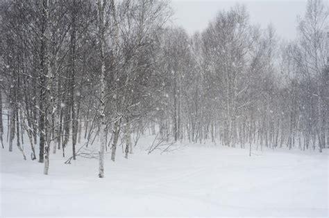 winter blizzard  stockarch  stock