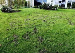 Löcher Im Garten : dachs macht rger looduskalender ~ Frokenaadalensverden.com Haus und Dekorationen