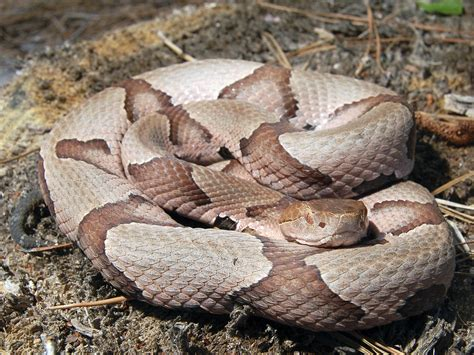 Facts can dispel fears of snakes   Mississippi State ...
