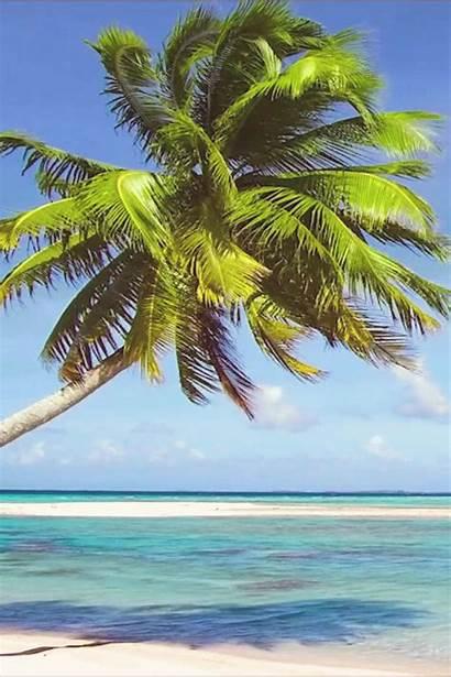 Tropical Palm Ocean Relaxing Trees Nothing Sway