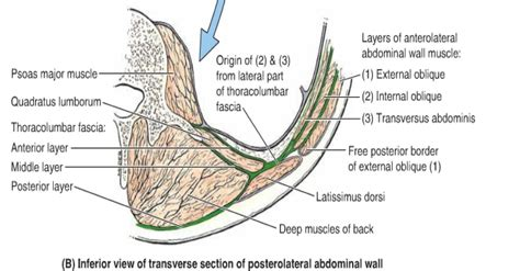 Sudden sharp pain in lower left abdomen can be more of a concern and depends upon both the gender and. Flashcards - GI and Abdomen - anterior abdominal wall abdominal wall layers   StudyBlue