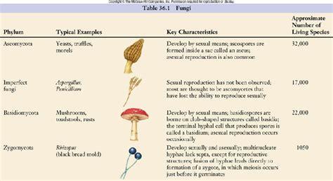 phyla mycology