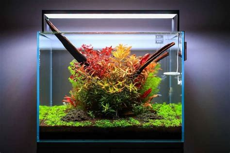 aquascaping tips aquascaping for beginners 10 helpful tips