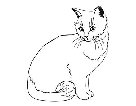 contoh gambar mewarnai gambar kucing tk