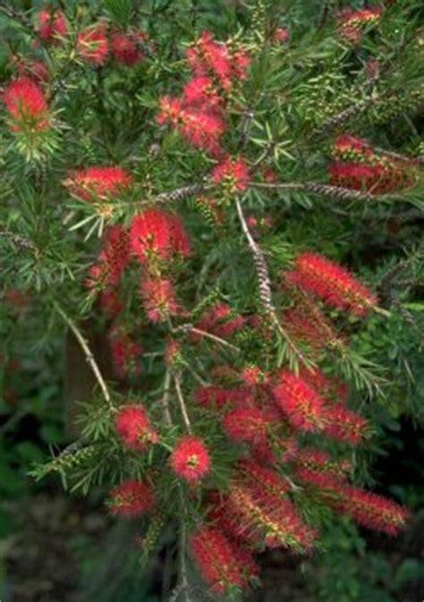 piante particolari da giardino piante particolari da giardino le palme