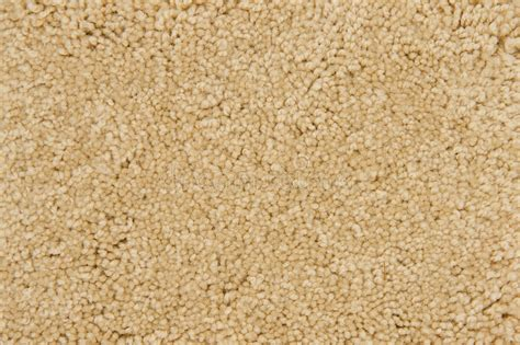 Beige Carpet Texture Stock Image. Image Of Cotton, Fiber Red Carpet Commando Remove Stains With Iron And Ammonia Best Way To Get Old Cat Urine Smell Out Of Dresses On The Southern Carpets Pmb Cleaners Newport Beach Ca Nissan Qashqai Mats G Fried