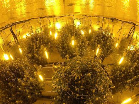 nice grow room  bigplants plants ceiling