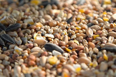 types of birdseed photo gallery