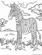 Zebra Coloring Pages Printable Sheets Animal Books Activity Sheet Colouring African Animals Printables Kid Boys Gorilla Bokito Paint Zebras Mewarnai sketch template