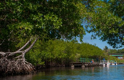 parque nacional laguna de la restinga directorio turistico de venezuela