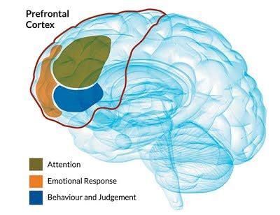 attention deficit hyperactivity disorder patna neuro