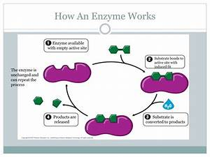 Ppt - Chapter 5- Enzymes Powerpoint Presentation