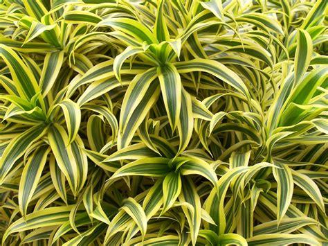 la cuisine verte plante dépolluante 10 plantes dépolluantes pour votre