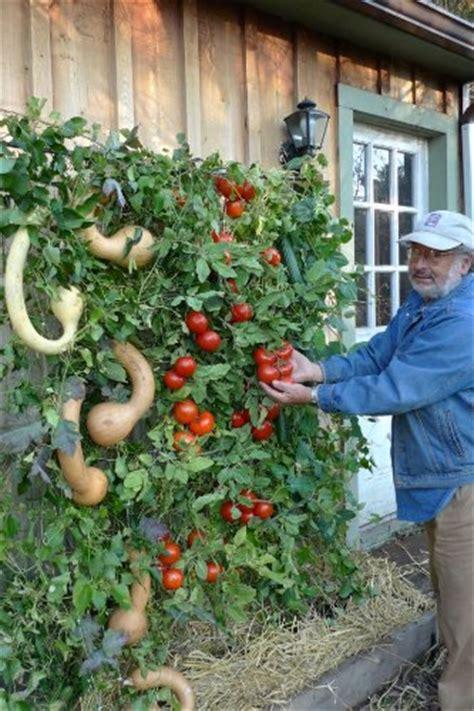 vertical vegetable garden how to make a vertical tomato garden