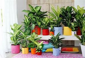 Plante D Intérieur : plante d 39 int rieur jacky la main verte ~ Dode.kayakingforconservation.com Idées de Décoration