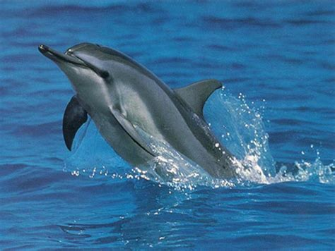 Dolphins Of The Great Barrier Reef Reef Biosearch