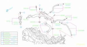Subaru Forester Engine Coolant Hose