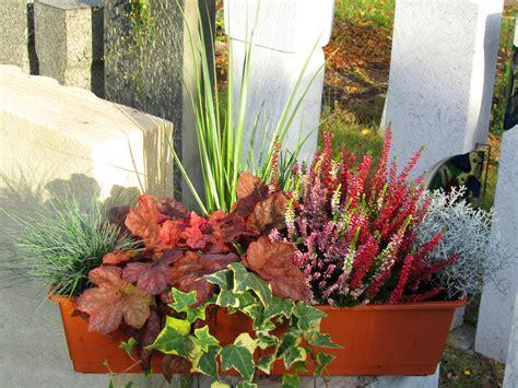 Balkonkasten Herbst Winter by Bepflanzter Balkonkasten 60 Cm Wintergr 252 N Im