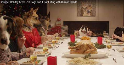dog eating at table holiday feast with 13 dogs and 1 cat at the dinner table