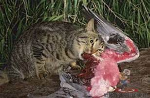 ferrel cat feral cats nationwide pest controlnationwide pest