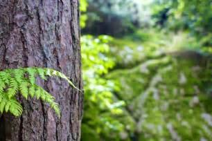 keeping emerald ash borers at bay in denver