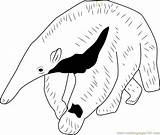 Anteater Coloring Giant Printable Template Coloringpages101 Pdf sketch template