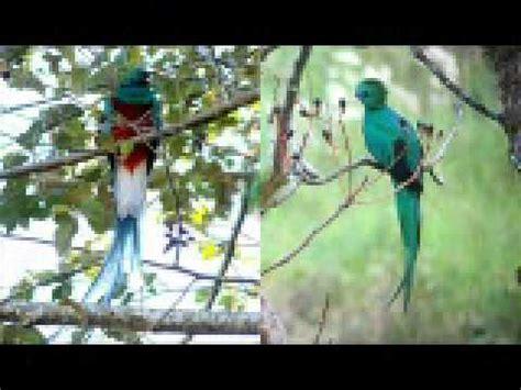 simbolos patrios de guatemalawmv youtube