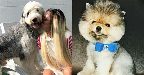 tiernos perritos de los famosos colombianos  vas