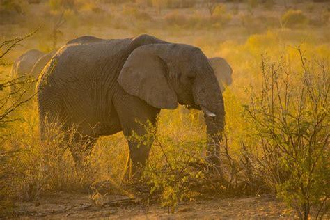 Foto elefante - Imagens Grátis Para Imprimir - img 30815