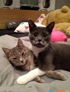 My friends kitten has a really sweet mustache cats ...