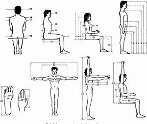 Figure 1 From An Anthropometric Data Bank For The Iranian