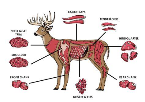 butcher diagram deer meat cuts venison survive
