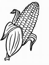 Corn Coloring Indian Printable Pages Cob Preschool Food sketch template