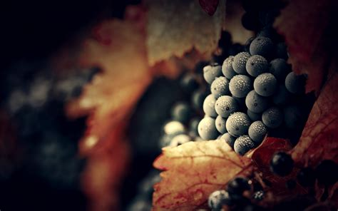 grapes full hd wallpaper  background image