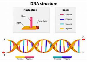 How To Make A Dna Model For Kids  Get Kids Excited By