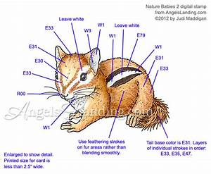 Baby Chipmunk Coloring Guide By Crafts