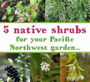 Best 25+ Pacific northwest style ideas on Pinterest Arm