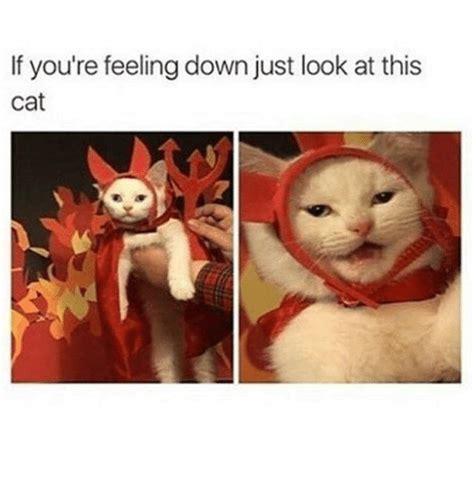 Feeling Down Meme - if you re feeling down just look at this cat meme on me me