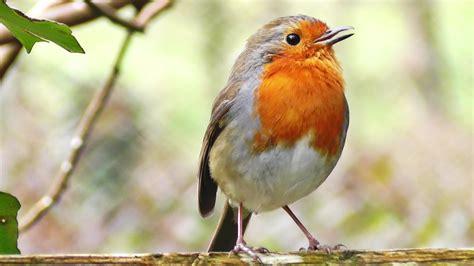 19 common british birds in your garden love the garden