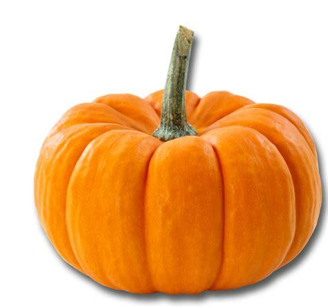 cuisiner un potiron fête du potiron le 11 novembre la terrasse du t3