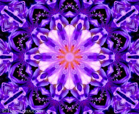purple floral kaleidoscope mandala