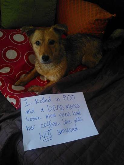 Poopy Dog Poly Poor Poo Shaming Dogshaming
