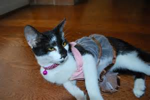 Cats Wearing Baby Clothes