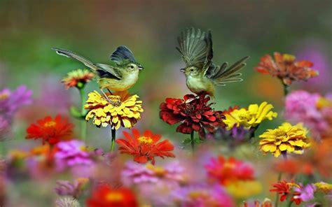 spring bird desktop wallpaper  images