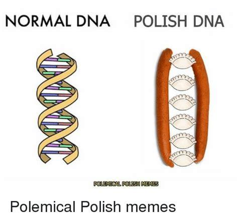Polish Memes - normal dna polish dna polemical polish memes polemical polish memes meme on me me