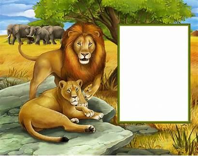 Transparent Jungle Clipart Frame Lions Lion Frames