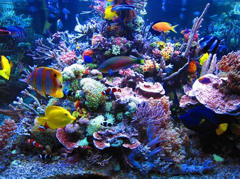 sea reef aquarium dormero hotel rotes ross reef aquarium reefland